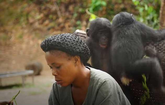 bonobo-eco-video.jpg